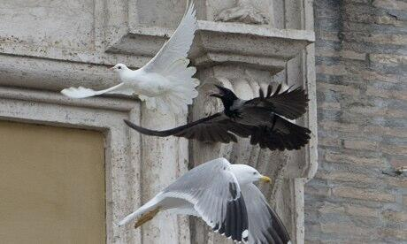 Black Crow and seagull attack pope's peace dove in St Peter's Square