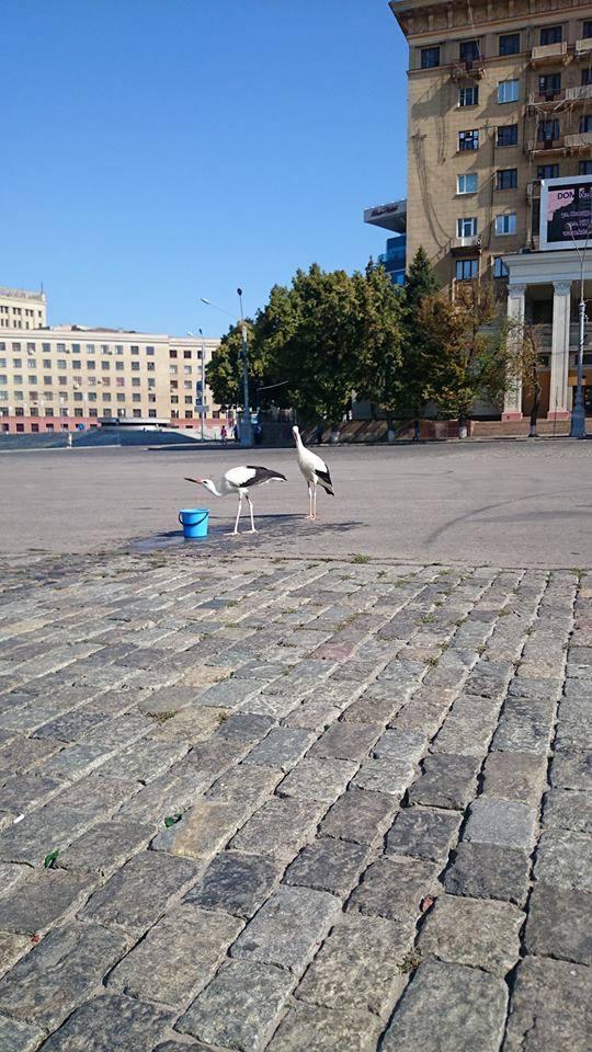 Storks in the centre of Kharkiv. Ukrainians believe that is good sign.