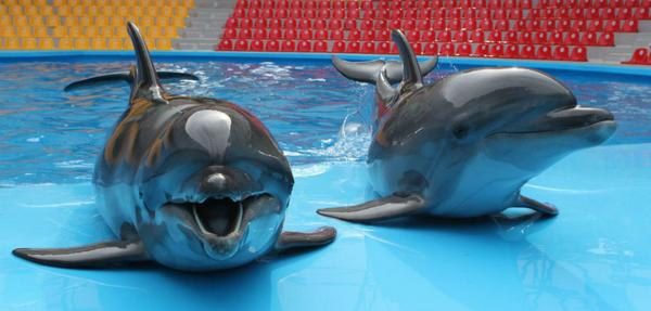 Ukraine's combat dolphins are now swimming for Russia