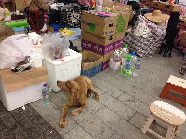 Man's best friend guarding supplies, says not afraid of tear gas. UmbrellaMovement