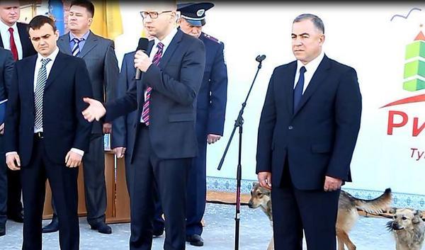 Stray dogs of Mykolaiv are not  afraid  Prime Minister Yatsenyuk - on the stage