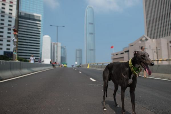 Car-free roads, short queues, and clean air: Positive side effects of HongKong protests