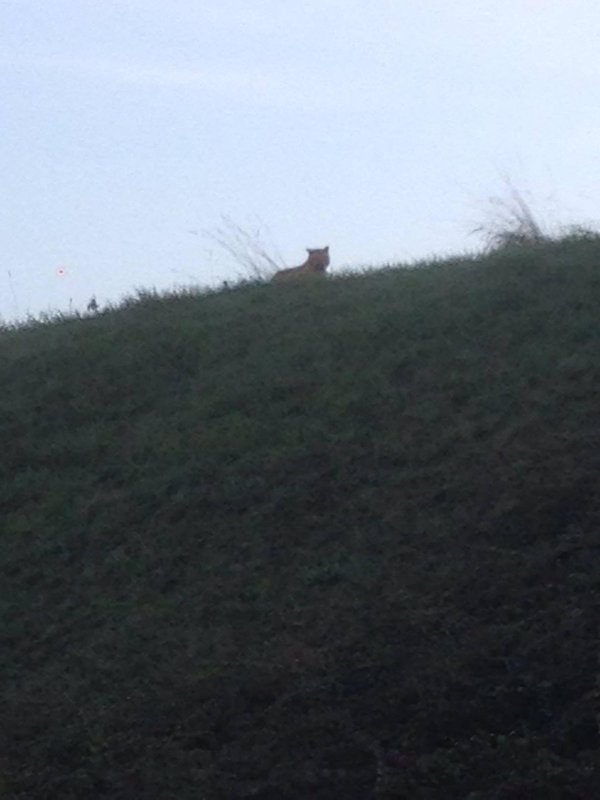 Police are hunting for a tiger reportedly on the loose near Paris