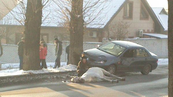 Car hit horse in Kharkiv