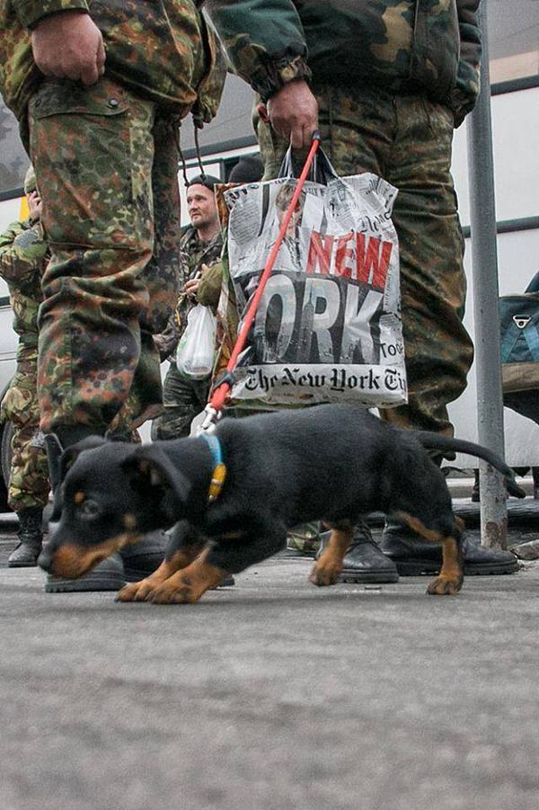 Lviv met the heroes of the battalion Volya