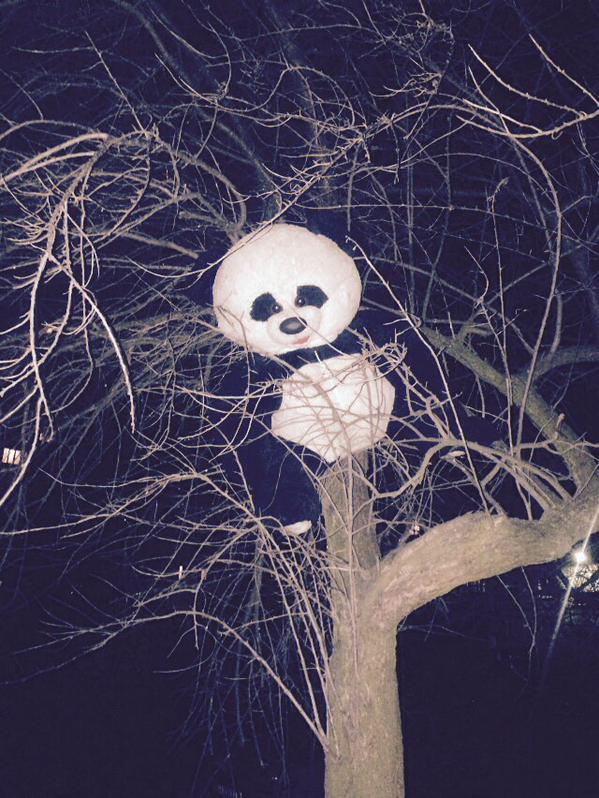 Shock wave put panda teddy bear on the tree. Mariupol