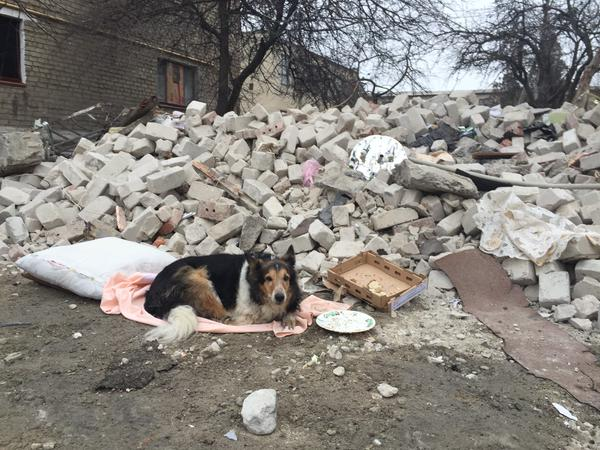 In Dokuchaevsk,where shelling hit this apt block, Virma the dog is still waiting for her owner to come home Ukraine